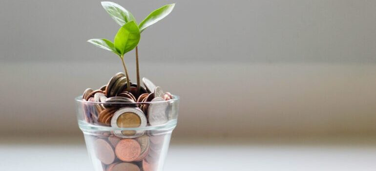 A sprout growing out of coins in a glass