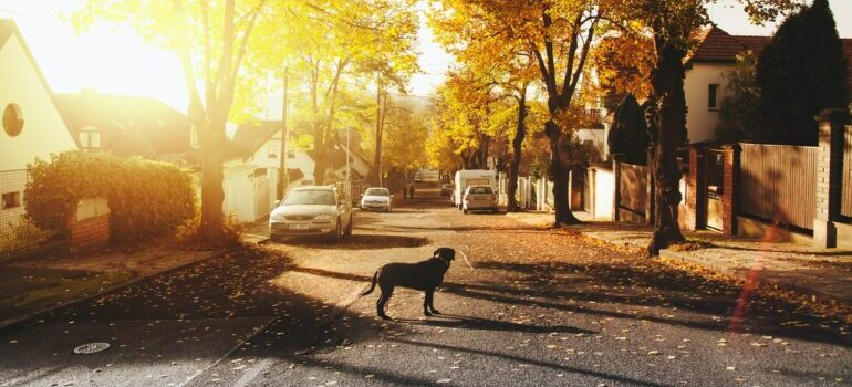 A streetview of a peaceful neighborhood.