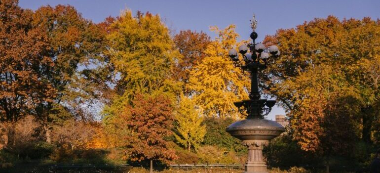 A park in autumn colors in manhattan